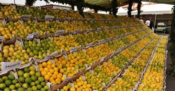 Festa do Limão 2014