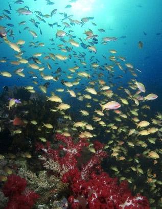 II Underwater Nature Festival